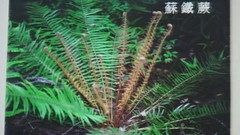 DSC07561 (yongheecs永和社大生態保育社) Tags: 林場