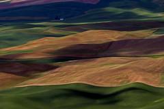Rolling Hills (slotibartfast) Tags: washington spring spokane shadows farm palouse steptoebutte