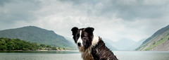 The Unfathomable Look (JJFET) Tags: dog mountain dogs collie sheepdog border collies