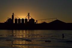 Golden grains (Don's View) Tags: silo farmtomarket farming corn columbiariver snakeriver grain portofpasco wheat easternwashington palouse