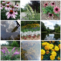 A Beautiful Day at ForMar (genesee_metcalfs) Tags: collage summer michigan august formar flowers nature pond sky echinacea marigold butterflyweed clouds