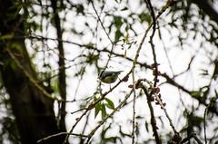 150502-IMG_0553 (matthiaskunz) Tags: bird birds spring ammer 2015 ammertal