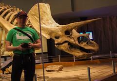 Truceratops - Selfie (juan_guthrie) Tags: drumheller alberta royaltyrrellmuseum dynosaur