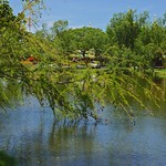 Tree leaning over a lake in Muang Boran (Ancient Siam) in Samut Prakan province, Thailand thumbnail