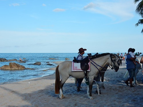 Horse #38 Awaits Rider