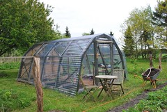 24/5.2015 - future tomatoes (julochka) Tags: greenhouse 365 countrylife inthegarden husbandisakeeper