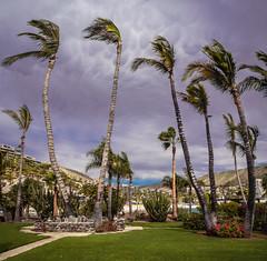 Palm trees at Amfi del Mar (tomidery) Tags: sky grancanaria clouds palms spain olympus amfidelmar m43 omdem5