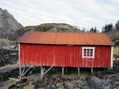 (SofiDofi) Tags: red outdoors bay norge may lofoten stilts nordnorge shabby nordland rorbu flakstad nusfjord vestvgy loveithere fishermanscabin spring2016 ninemonthsupnorth ninemonthsinthenorth