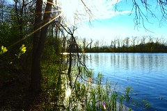 Bannister Lake, Ontario (douglasmmiller810) Tags: lake plant tree forest landscape fishing outdoor hiking swamp brock pike bannister hikeing