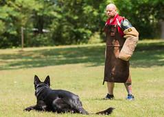 2016-05-22, IPO Training-35 (Falon167) Tags: dog shepherd josh german miles gsd germanshepherddog