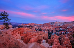 Pink Sunset at Bryce Canyon (danielacon15) Tags: travel pink blue sunset red usa snow nature beautiful landscape utah nationalpark amazing interesting rocks erosion depression destination bryce geology brycecanyon patches hoodoos amphiteather