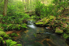 Hypsy Creek (2) (Nicholas_T) Tags: trees nature creek forest waterfall moss spring rocks stream hiking pennsylvania falls rhododendron cascades creativecommons poconos ravine monroecounty stategamelands38 stategameland38 sgl38 hypsycreek hypsygap