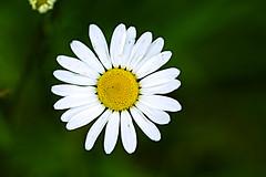 Flower (georgehart64) Tags: white flower yellow canon whiteflower scotland aberdeenshire aberdeen seatonpark canoneos70d