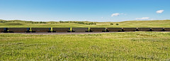 DAPX 556 coal gond-Ashby, Nebraska. (Wheatking2011) Tags: dapx dairyland power cooperative genoa wisconsin 30 another plant wausau bnsf railroad ashby nebraska