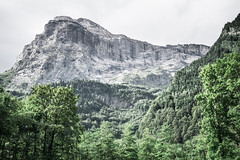 Titlis North Face (jonasfischle) Tags: gelb mountain northface titlis wall structure woods mystic wand struktur fels stein stone berg outdoor klettern climbing stimmung mystisch