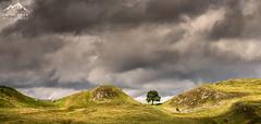 Sycamore Gap (.Brian Kerr Photography.) Tags: sycamoregap tree hadrianswall northumberland clouds sky light sonyuk a7rii briankerrphotography briankerrphoto