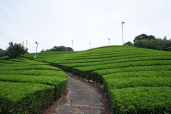 DSC02448 (mashirim01) Tags: tea kyoto japan  greentea