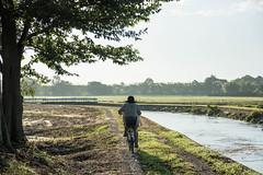 Commuter (odeleapple) Tags: nikon d810 af nikkor 28105mm commuter bicycle paddy channel