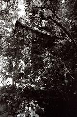 Porst SP Busch Gardens Old Mill 1 () Tags: original busch gardens pasadena los angeles california history heritage theme park film tour mill waterwheel 1920s adolphus public private abandoned slr m42 classic retro vintage 35mm camera porst germany 1970s