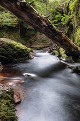 Froth (Ian D) Tags: fujixt2 finnichglen devilspulpit scotland burn stirlingshire water fuji fujifilm carnockburn