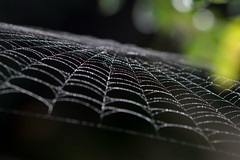 Fading Light. (Omygodtom) Tags: web existinglight macromonday macro tamron90mm tamron texture detail digital diamond star nature natural nikon d7100 raindrop waterdrops mist dew ngc