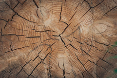 (gwilwering) Tags: fissure snag stump texture trees wood