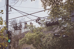 269 365+1 2016 Shoes on the Wire, Houston Texas (Kris McNeil) Tags: 3651 366 365 2016 houston texas telephone wire shoes traffic lights signals green light