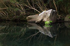 There's this other world... (Jutta Sund) Tags: pond water rock trees reflection tranquility peaceful creek scenery landscape australia nationalpark forest
