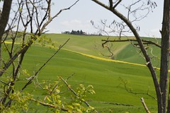 Val d'Orcia in cornice (Daniele4Gatti) Tags: valdorcia toscana grass field cornice natura alberi verde giallo grano pienza