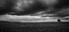 Sadly weather (Pavel Cervenka Photographer) Tags: cloud clouds dramatic hdr landscape land field wide panorama minimal blackandwhite bw monochrome czech republic canon 2470 pavel cervenka ostrozska nova ves contrast autumn weather tree solitaire