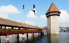 Kapellbrücke (Tourist Cliché) (haslo) Tags: kapellbrücke luzern lucerne switzerland schweiz clouds birds tourism cliché