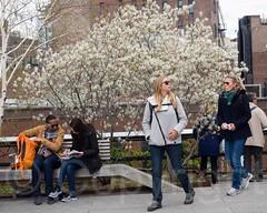 The High Line Elevated Urban Linear Park, Manhattan, New York City (jag9889) Tags: park nyc newyorkcity urban usa ny newyork chelsea unitedstates manhattan unitedstatesofamerica walkway promenade elevated highline linear railwaytracks nycparks 2015 publicpark newyorkcentralrailroad westsideline highlinepark newyorkcitydepartmentofparksrecreation jag9889 aerialgreenway 20150426