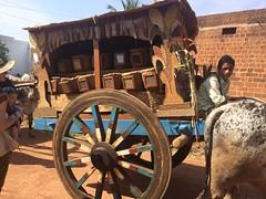 Ox cart parade through villages