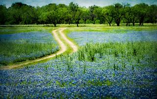 Blue Fragrance_3817-