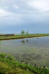 elállt az eső / it stopped raining (debreczeniemoke) Tags: spring transylvania transilvania tavasz erdély voivodeni vajdaszentivány canonpowershotsx20is sedgelake sátétó laculsate