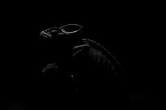 CHAMELEON (ricomm101) Tags: dubai nocturnal lizard lowkey chameleon chiaroscuro dubaiaquarium ricomm101