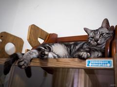 破許 (阿喃) Tags: cat taiwan olympus 貓 omd em5 17mmf18 破許