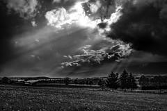 ...Transition... (7H3M4R713N) Tags: trees sky blackandwhite bw cloud sun tree nature monochrome clouds dark mono switzerland europa europe suisse noiretblanc outdoor swiss fujifilm rays paysage neuchtel rayoflight xseries romandie xt1 fujinonxf23mmf14 imfuji imfujifilm