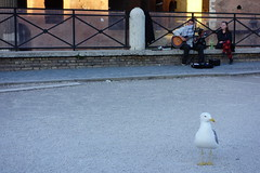 Waiting our song (Alessandro Ronchi) Tags: rome roma foriimperiali forotraiano viaalessandrina