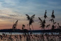 (petertammi) Tags: sunset canon sweden canon5d sverige sdertlje canonphotography canonphotographer canon5dmkiii canon5dmarkiii canon5dmark3