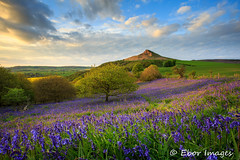 Roseberry Topping (The Barbican) Tags: light sunset colour bluebells purple famous northyorkmoors greatayton northyorkshire roseberrytopping
