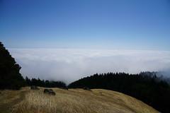 Mount Tamalpais: Rock Spring to Stinson Beach Hike (16) (Planet Q) Tags: mttam marinheadlands