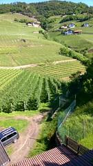 San Genesio, Alto Adige (Nevica) Tags: italy vines italia grapes altoadige