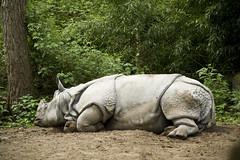 Rhinoceros (Mary Berkhout) Tags: green animal zoo rhinoceros amersfoort dierentuin neushoorn maryberkhout