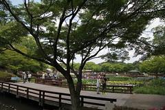 (eyawlk60) Tags: iris plant flower june garden rainyseason