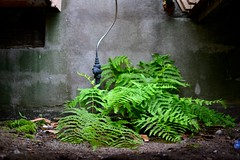 (s▲r▲) Tags: plants nikon sudburyontario sudburyon