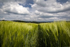 inviting field (bernd obervossbeck) Tags: sky green nature field clouds landscape spur outdoor landwirtschaft natur feld trace himmel wolken grn agriculture landschaft landscapephotography drausen landschaftsfotografie canoneos60d berndobervossbeck