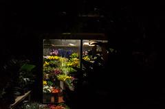 Flower Shop (Romeo Alaeff) Tags: nyc newyorkcity flowers ny newyork window manhattan flowershop