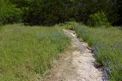 Tex's trail_4885 (San Marcos Greenbelt Alliance) Tags: trailheads flowercloseups sanmarcosgreenbeltalliance smgaphotobylancejones