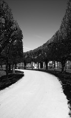 Path (Ren-s) Tags: trees light sky blackandwhite sun france castle clouds pond ciel arbres chambord chateau nuages loire tang